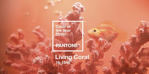 991c12a3ca Living Coral is Pantone's Colour of the Year 2019