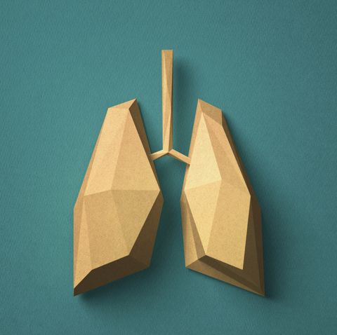 Paper craft Lung