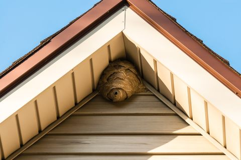 How To Get Rid Of A Wasps Nest How To Kill Hornets And Wasps
