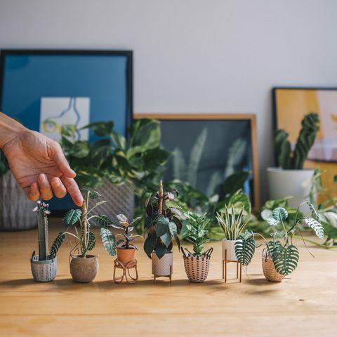 Houseplant, Flowerpot, Plant, Room, Flower, Tree, Hand, Interior design, Herb, Wood,