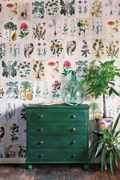 plantas de interior recibidor con cajonera verde y plantas
