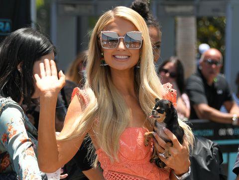 Los Perros De Paris Hilton