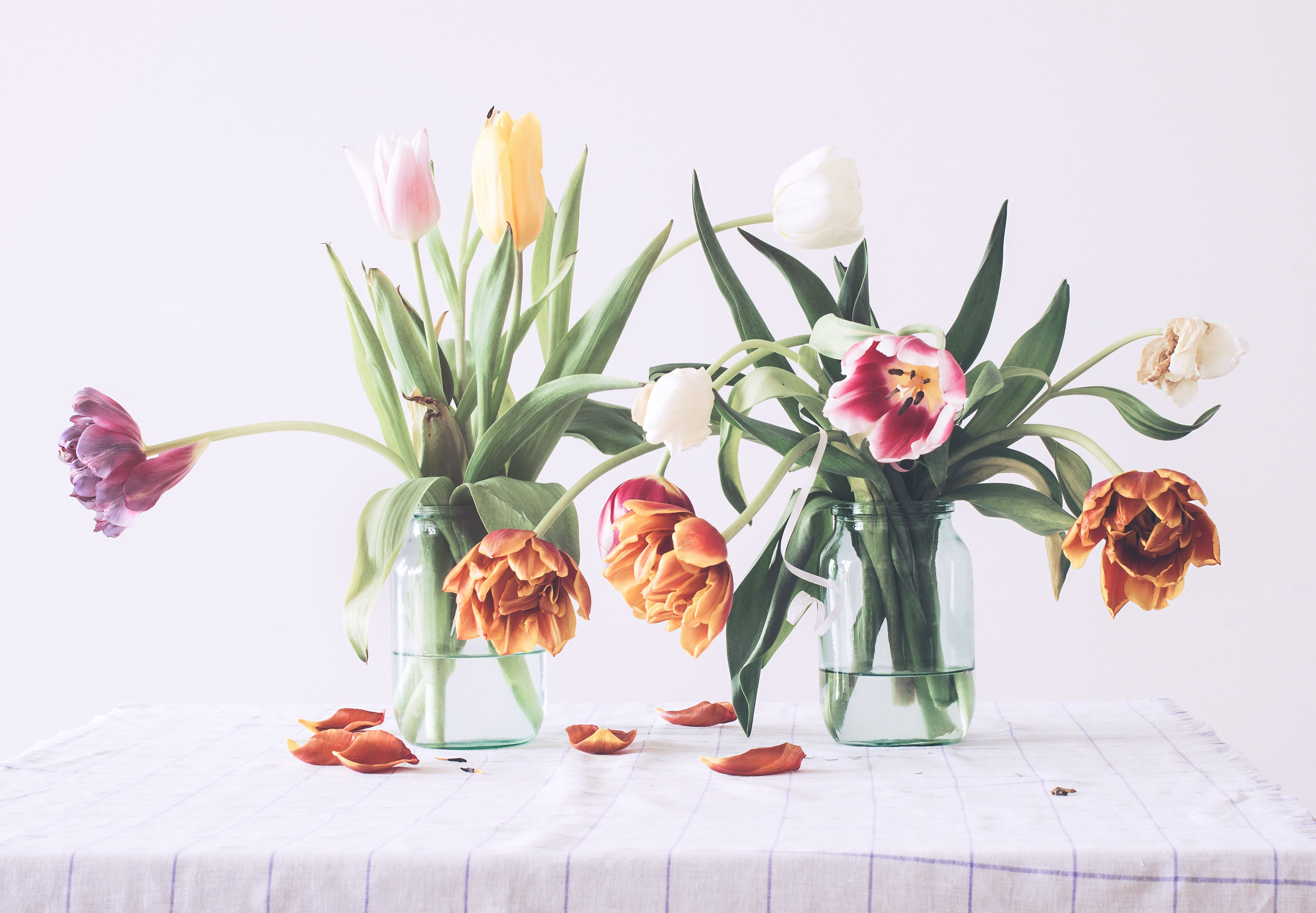 How To Stop Tulips Drooping Tulips In A Vase
