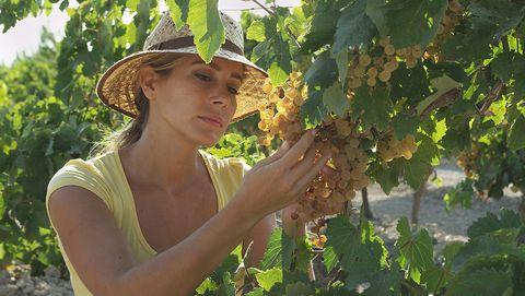 Paseo por viñedos mediterráneos