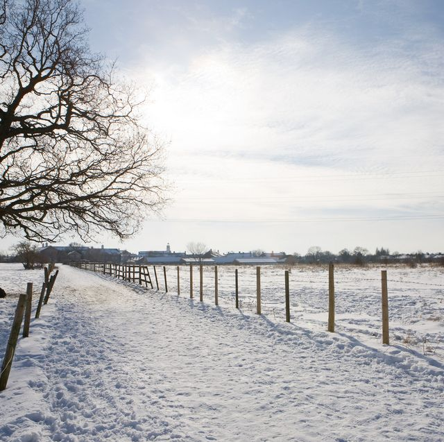snowy winters could disappear for good in the uk , due to climate change