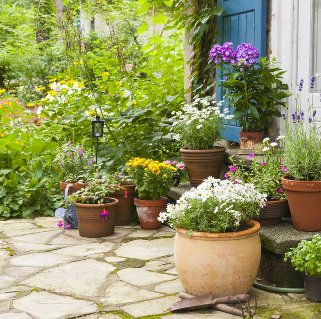 15 Best Patio Plants Outdoor