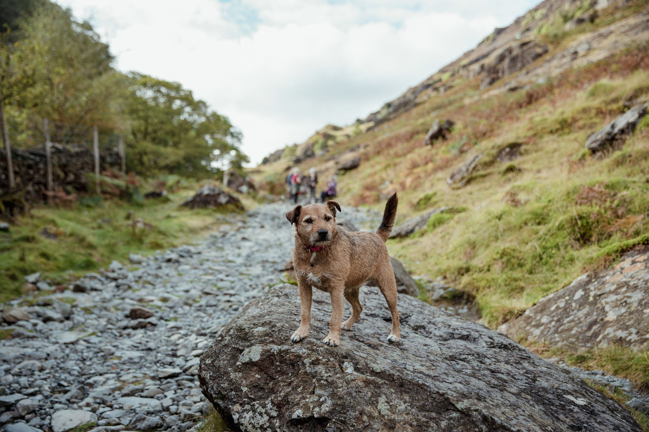 Tired Terrier rescued from Lake District after refusing to walk any further