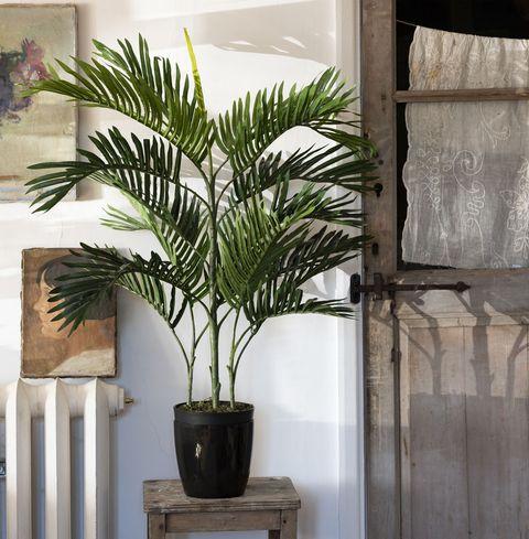 Plant, Houseplant, Tree, Flowerpot, Arecales, Palm tree, Woody plant, Flower, Date palm, Terrestrial plant,