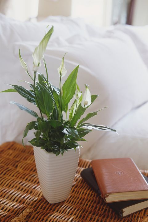 12 Best House Plants Easy Plants To Care For