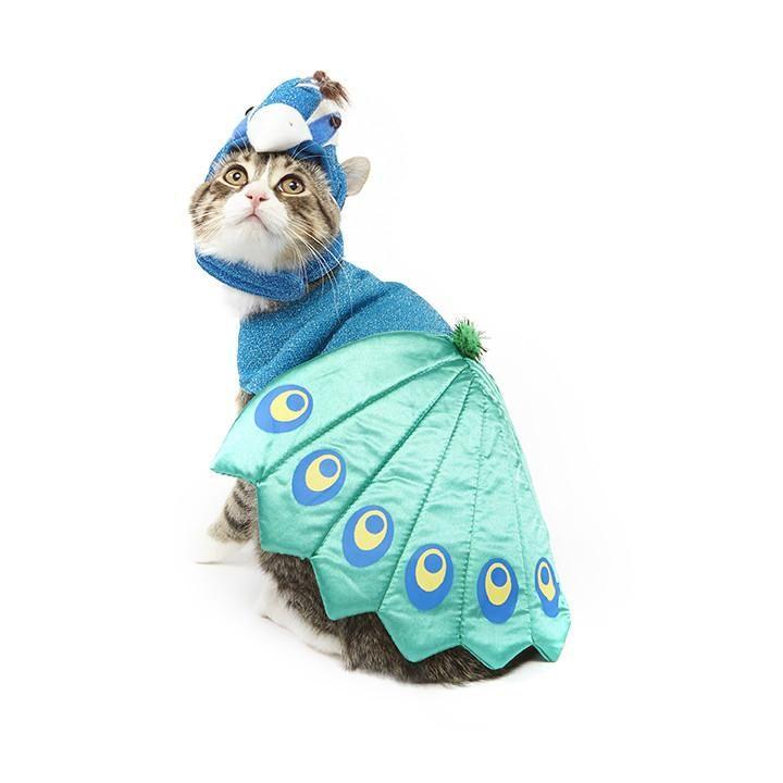 peacock cat halloween costume  sc 1 st  Womanu0027s Day & 26 Pet Cat Halloween Costumes 2018 - Cute Ideas for Cat Costumes