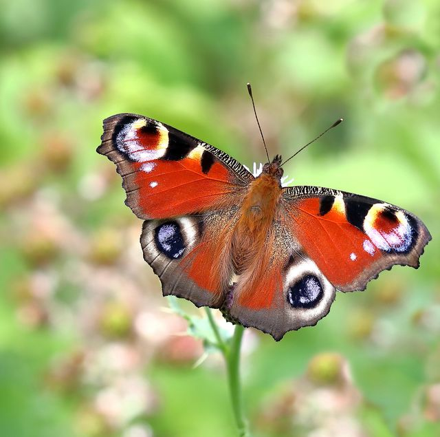 the big butterfly count 2021