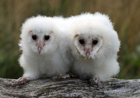 Viral Owl Video 2019 | Owls Without Feathers | Facts About ...