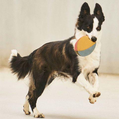 pelota de tela de colores para perros