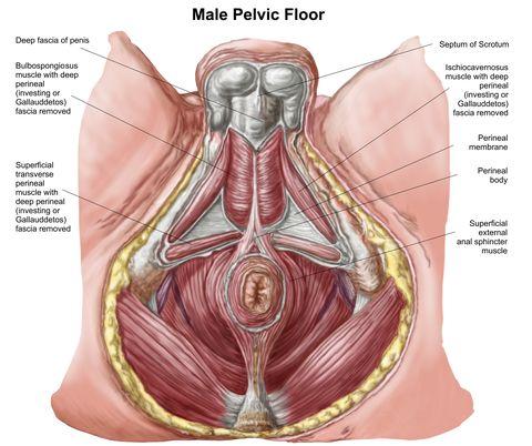 ce este rău la un penis mare cum să îmbunătățiți cu adevărat o erecție