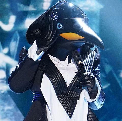 Bird, Penguin, Flightless bird, Organism, King penguin, Fictional character,