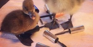 Why people are saving their mascara to help the wildlife