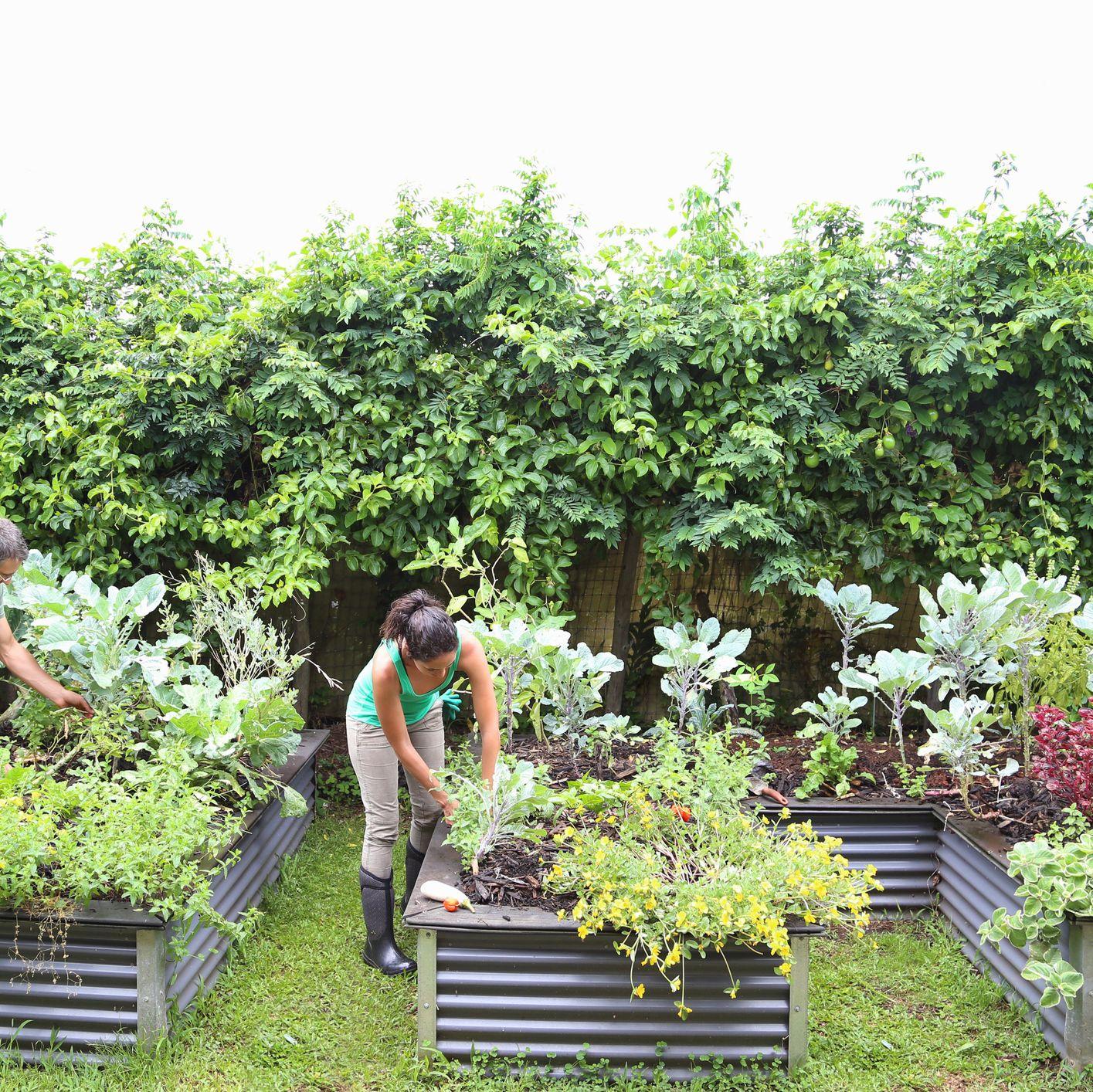 https://www popularmechanics com/home/lawn-garden/how-to/g92/build-raised-garden-beds/