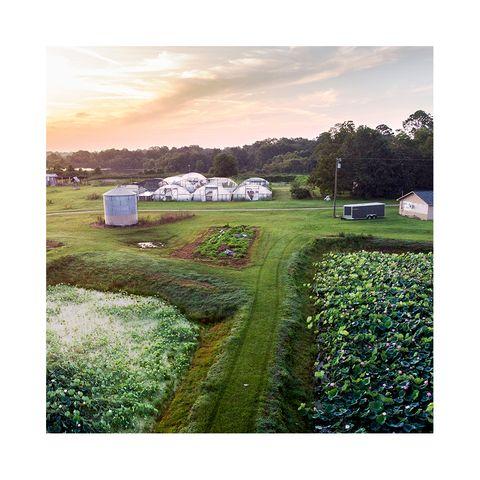 Fresh Lotus Farm