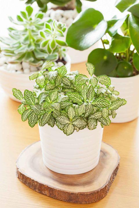 Makkelijke planten: wij hebben 20 kamerplanten voor je op een rij gezet