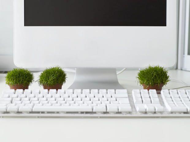 Piante Ufficio Stress : Le piante per purificare l aria in ufficio cure naturali