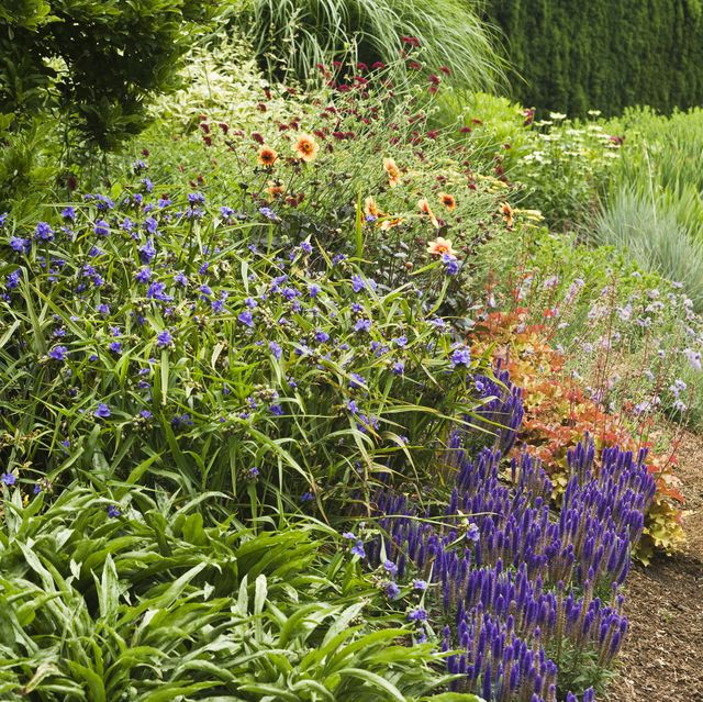 15 Best Low Maintenance Flowers For Your Garden Easy