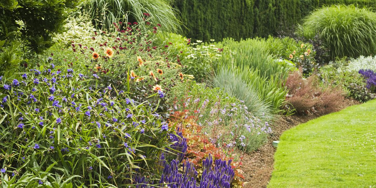 15 Best Low-Maintenance Flowers for Your Garden — Easy ...