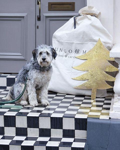 Mascotas: Regalos de Navidad