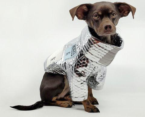perro con chaqueta metalizada de diseño sostenible