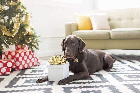 perro con regalo de navidad