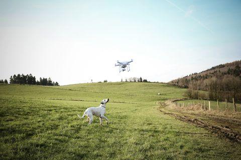 perro siendo paseado por un drone