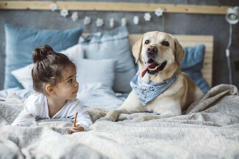 Perros en casa