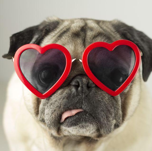 perro con gafas de corazón