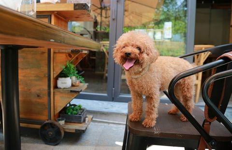 restaurantes en españa para petlovers con perros