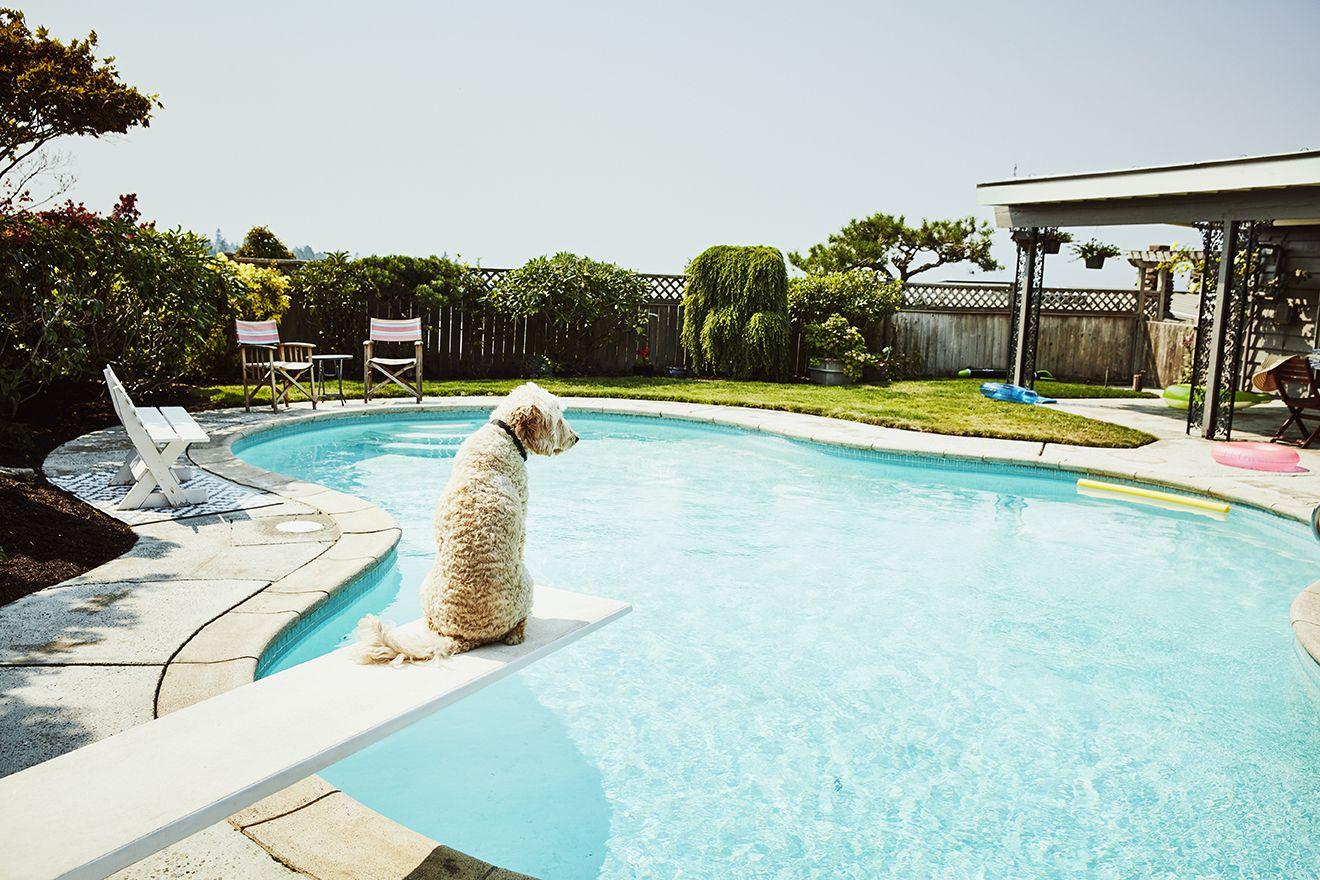 Perro en la piscina
