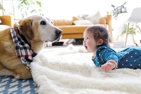 perro y bebé jugando en el suelo