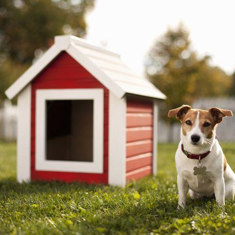 perro y caseta en el jardín