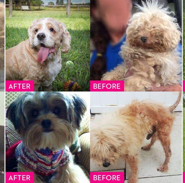 antes después perros adoptados