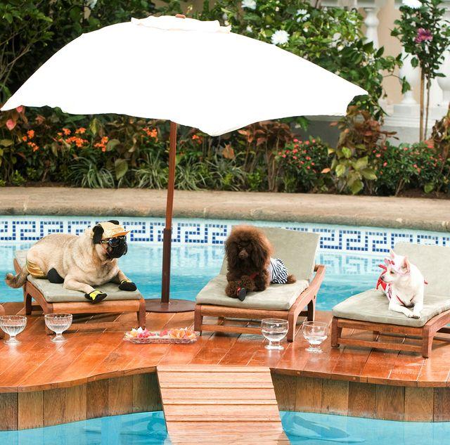 perros en la piscina