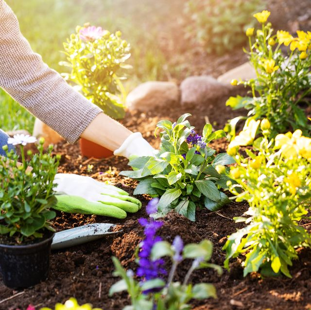 daily dose of gardening boosts wellbeing as much as exercise, says rhs