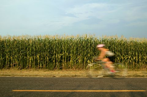 Person riding bicycle past corn field (blurred motion)