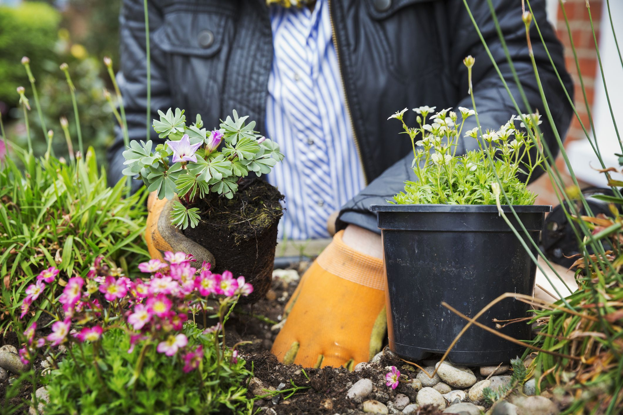 30 Minutes Is The Recommended Daily Allowance Rda For Gardening