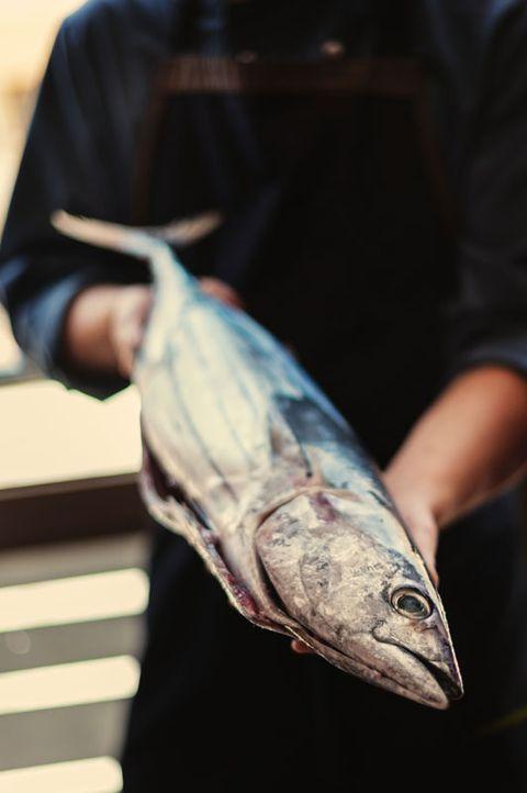 los pescados de tenerife viejas, samas, chernes o cabrillas
