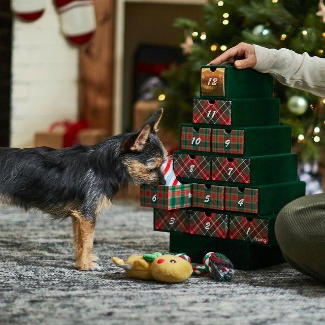 dog with pet advent calendar