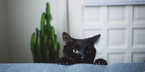 back cat names