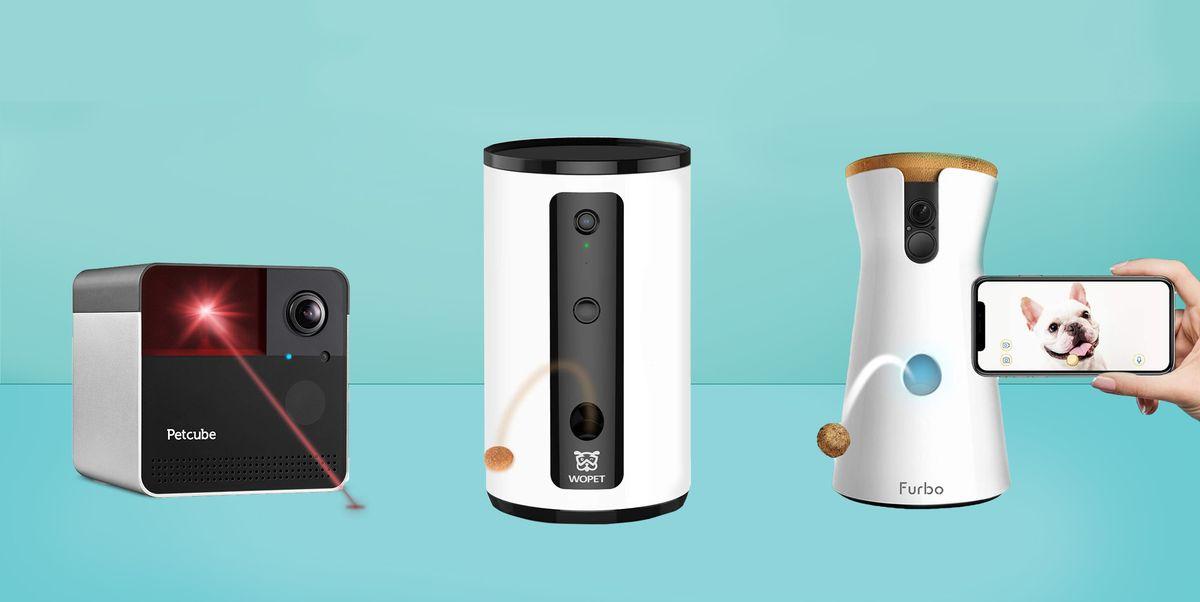 6 лучших камер для домашних животных, чтобы следить за своими пушистыми друзьями