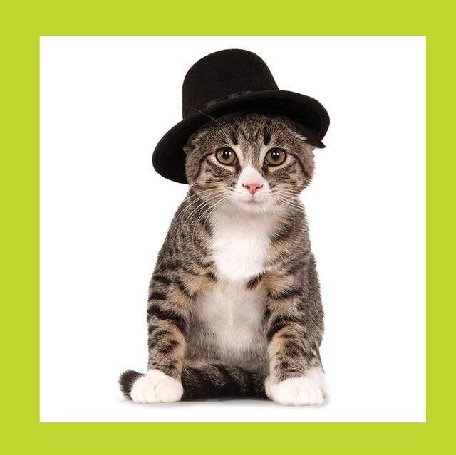 Best Cat Halloween Costumes 2020 Cute Ideas For Cat Costumes