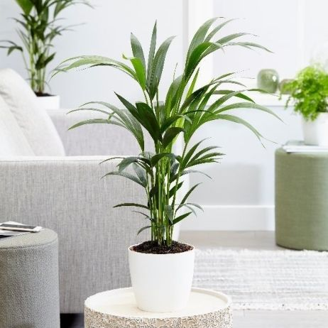 6 pet friendly plants that will brighten up your living space