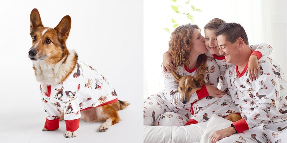 26 Pet Gifts to Give Your Dog or Cat the Most Pawsome Holiday Yet