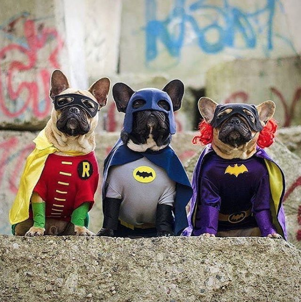 30 Animals Dressed in Halloween Costumes That Are So Cute It's Scary