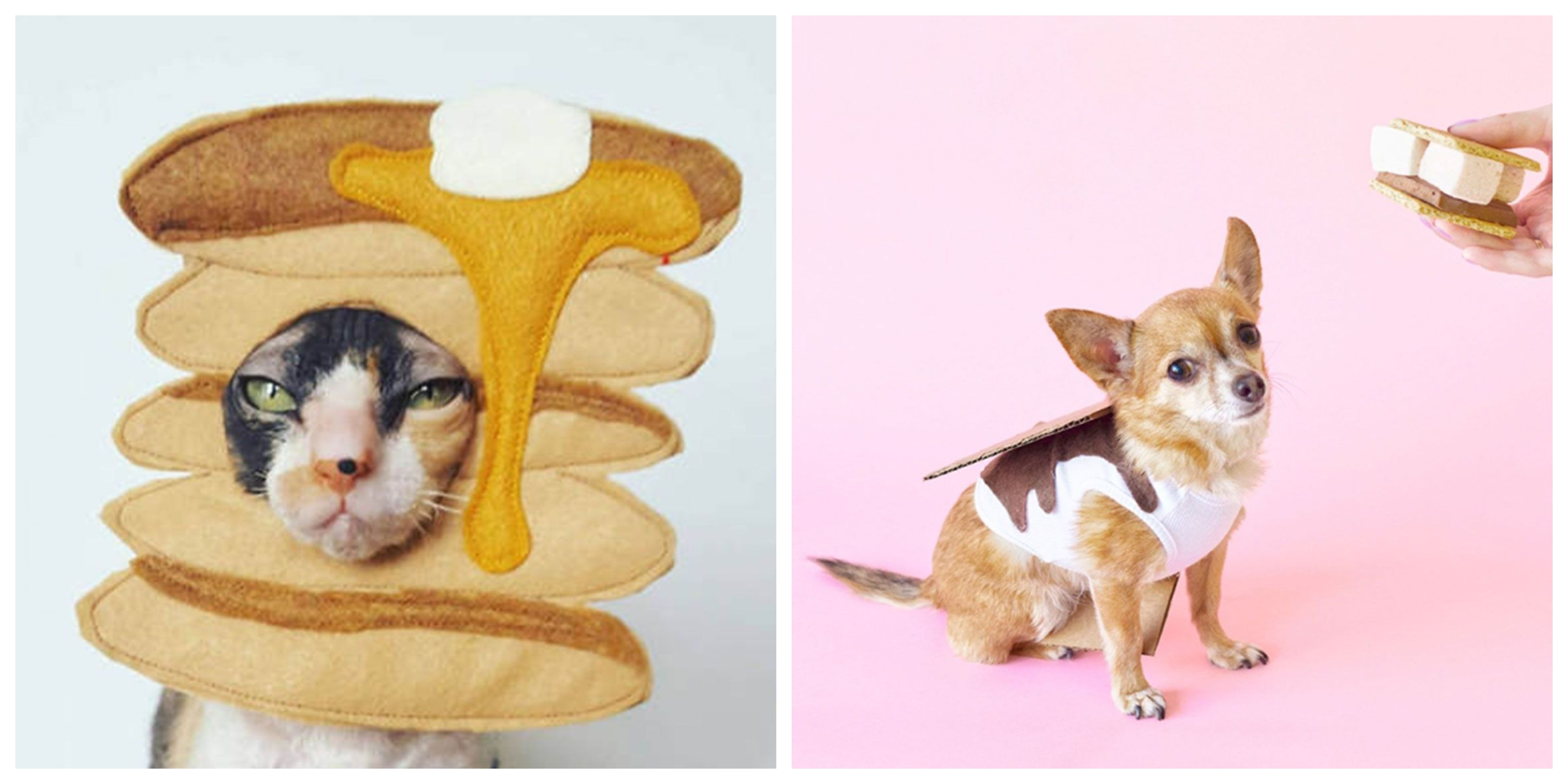 32 Cute Pet Costumes For Dogs Cats Best Halloween Pet Costume Ideas